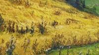Картина маслом пейзаж «Пшеничное поле» купить живопись Украина