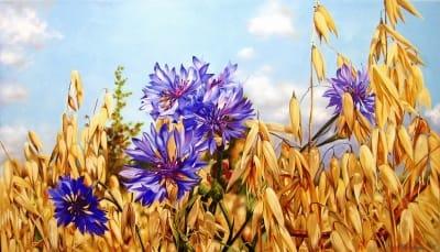 Картина «Васильки. Поле» купить живопись для современных интерьеров Украина